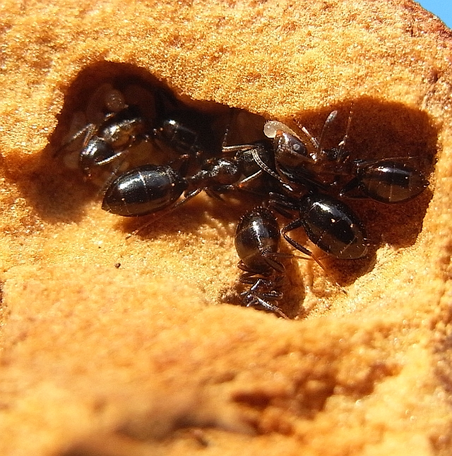 antstore world of ants thema anzeigen die steppen istriens. Black Bedroom Furniture Sets. Home Design Ideas