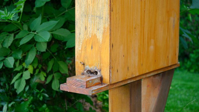 Bienen Ein Schwarm Findet Eine Neue Bleibe Andere